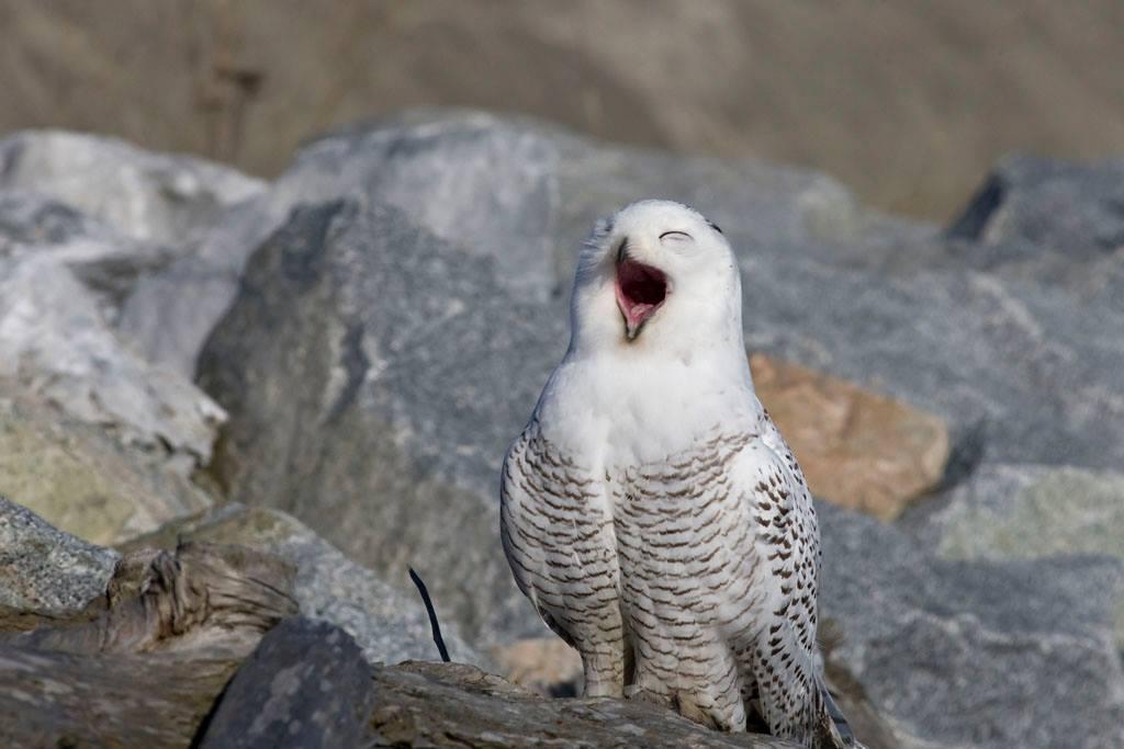 國境灣公園賞鳥 Boundary Bay Regional Park